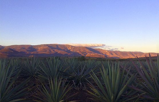 History of Mezcal